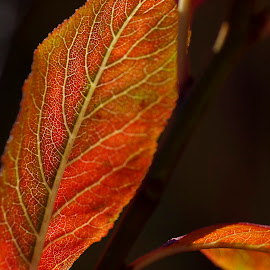 Last Leaves by Ken Mickel - Nature Up Close Leaves & Grasses ( up close, nature, nature up close, nature close up, plum tree, leaf, leaves, close up )