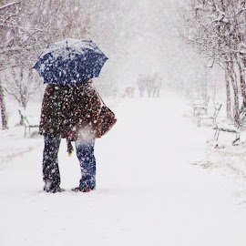 Love story by Cosmin Garlesteanu - People Couples ( love, kiss, story, winter, umbrella, snow, couple, people )