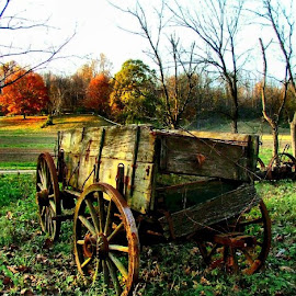 The Old Conestoga by Julie Dant - Transportation Other ( wagon wheels, conestoga, old wagons, pioneers, antiques )