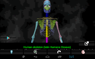 Screenshot of Bones Human 3D (anatomy)
