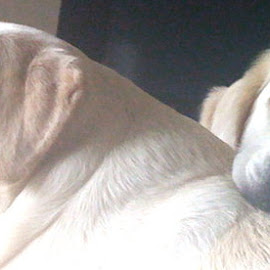 best friends by Jennifer Rourke - Animals - Dogs Playing