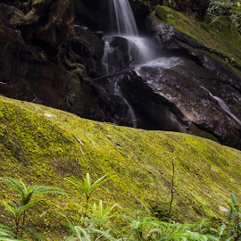 Greenage by Dan Searle - Landscapes Forests ( fern, green, waterfall, moss, forest, motion, rocks, rainforest )