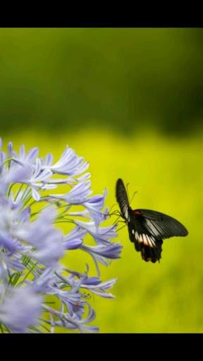 玩攝影App|蝶々写真免費|APP試玩