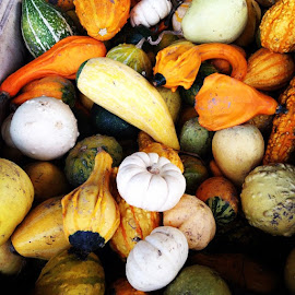 Fall Harvest by Tina Cornet - Food & Drink Fruits & Vegetables