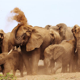 Elephant Herd by Arun Prasanna - Animals Other ( #elephant #heard #spray #mud )