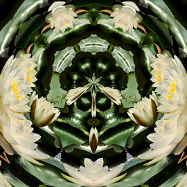 Water Lilies in the Round 1 by Tina Dare - Digital Art Abstract ( abstract, patterns, nature, manipulated, designs, distorted, circle, flowers, shapes )