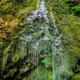 Niagara Falls of Oregon by Jake Egbert - Nature Up Close Water ( yamhill county, oregon, peaceful, willimina, niagara falls, 2014, green, waterfall, moss, coastal range, oregon waterfalls )