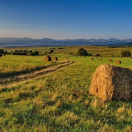 by Alexander Bakhur - Landscapes Prairies, Meadows & Fields