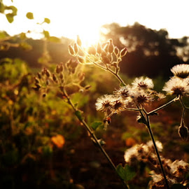 Morning in the field by Jayesh Bhanushali - Nature Up Close Gardens & Produce ( golden hour, sunset, sunrise )