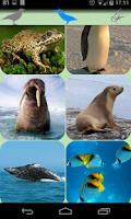 Screenshot of Animal sounds.