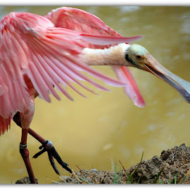 by Carol Stiles - Animals Birds