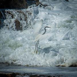 by Anneline Gouws - Animals Birds