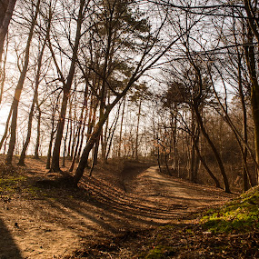 Serene by Andreea Alexe - Landscapes Forests ( green, trees, forest, flare, spring, woods, sun, branches, rays,  )