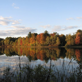 Fall Reflections by Diane Butler - Landscapes Waterscapes ( autumn, fall, trees, lake, leaves )