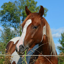 Hey Darling by Mario Monast - Animals Horses ( horse, portrait, animal )