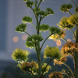 evening by Magdalena Strojnowska - Nature Up Close Other plants