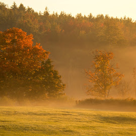 Autumn Fog by Katie Munson - Landscapes Prairies, Meadows & Fields ( field, morning sun, fog, foliage, trees )