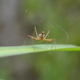 a bug by Casterino Rio - Novices Only Macro ( plant, macro, green, insect, garden )