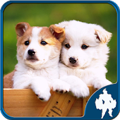 Download Dogs Jigsaw Puzzles APK to PC
