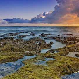 The Coral by Ewin Cappucinno - Landscapes Beaches