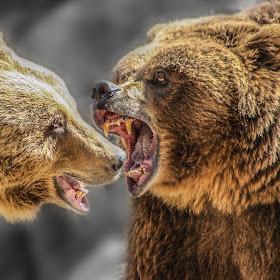 20080321-IMG_0799-bear.jpg