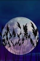 Screenshot of Reeds Live Wallpaper
