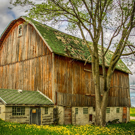 farm life by Tommie Davis - Buildings & Architecture Other Exteriors ( farm, hdr, barn, art, rural, country )