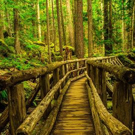Bridge to Serenity by Judi Kubes - Landscapes Forests ( washington, olympics, serene, green, trail, trees, forest, bridge, hike, renewal, forests, nature, natural, scenic, relaxing, meditation, the mood factory, mood, emotions, jade, revive, inspirational, earthly,  )