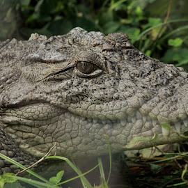 k t photography by Kanha Tarare - Animals Amphibians ( kanhatarare )