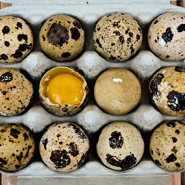 Egg by Heather Aplin - Food & Drink Ingredients ( shell, eggs, quail, box, yolk )