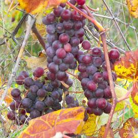 by Vickie Harris - Food & Drink Fruits & Vegetables