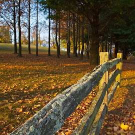 Autumn in Ohio by Dan Ferrin - Landscapes Prairies, Meadows & Fields ( fence, autumn leaves, nature, trees, landscape )