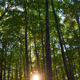 Sunny Day 2 by Karl Granzin - Landscapes Forests ( upper peninsula, michigan, trees, forest, woods, tall )