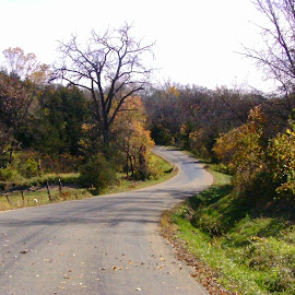 Autumn Illinois Road Scene by Kathy Rose Willis - Landscapes Prairies, Meadows & Fields ( curve, illinois, autumn, trees, road )