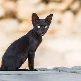 by Mohammad Alqorashi - Animals - Cats Kittens
