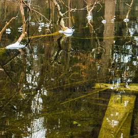 Branched  Standing Water by Michael Stefanich Jr. - Nature Up Close Water ( #winter, #nature, #pond, #tree, #water )