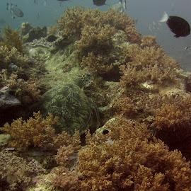 Turtle in the Hydroids by DJ Cockburn - Landscapes Underwater ( mafia, tanzania )
