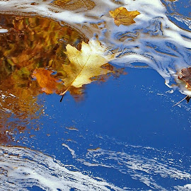 Caught in the Current by Mark Mynott - Nature Up Close Leaves & Grasses ( water, autumn, fall, reflections, october, flow, leaves, foam, river )