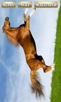 Screenshot of Majestic Horses  game