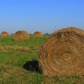 by Nancy Tharp - Landscapes Prairies, Meadows & Fields