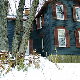 Blue House, Brown Shutters by Kathy Rose Willis - Buildings & Architecture Homes ( swooden, home, old, galena, illinois, blue, snow, trees, brown,  )
