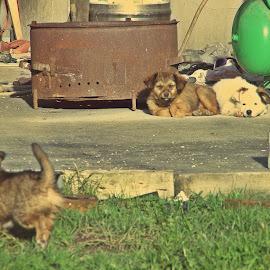 Bad company by Kaja Radošević - Animals - Dogs Puppies