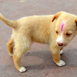 loving puppy by Sethi Kc - Animals - Dogs Puppies ( loving puppy,  )