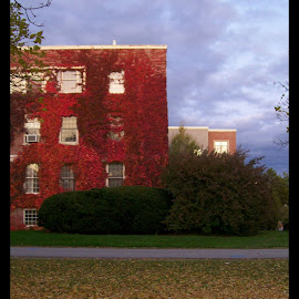 Bold by Dyana-Marie Dyke - Buildings & Architecture Other Exteriors ( building, sky, autumn, ivy, leaves,  )