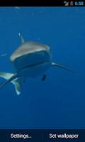 Screenshot of Shark Video Live Wallpaper