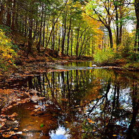 Autumn by Carl Testo - Landscapes Forests ( mill, autumn, sleeping giant, forest, river )