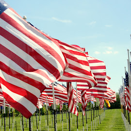 Memorial Day Flag Display by Patricia Hider - News & Events US Events ( war memorial, memorial, flags, voice of america, voa park, memorial day, voa )