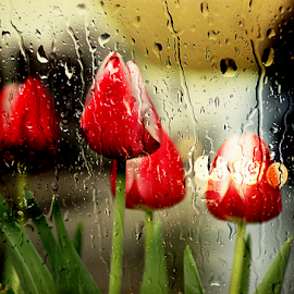Spring Rain by Darlene Lankford Honeycutt - Digital Art Things ( window, dl honeycutt, tulips, flowers, digital, rain,  )
