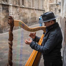 Street harpist by Liam Coburn Dunne - People Musicians & Entertainers ( harp, nikon 24-70, nikon d800, fingers, street, strings, musician, harpist, hat )