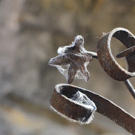 The iron flower by Vladimir Bogovac - Buildings & Architecture Other Exteriors ( roof, snow, rust, iron, flower,  )